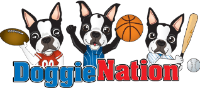 Up To 50% OFF On DoggieNation Clearance Items